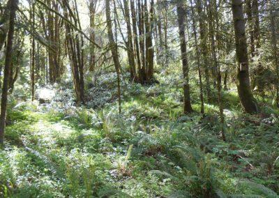 Forest - Cloud Mountain Reteat Center